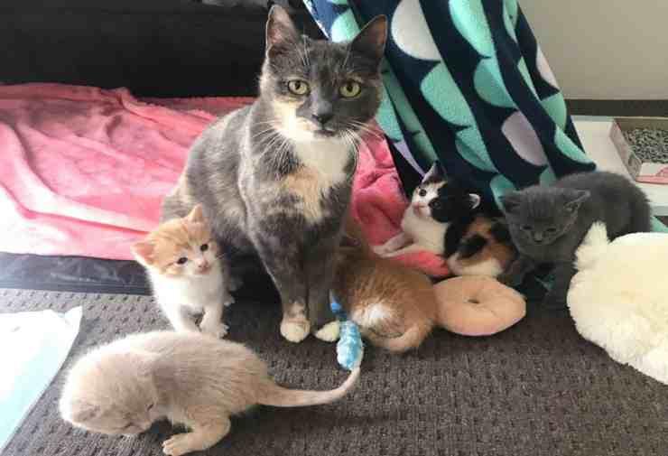 Mamma gatta e i suoi cinque cuccioli (foto Instagram)