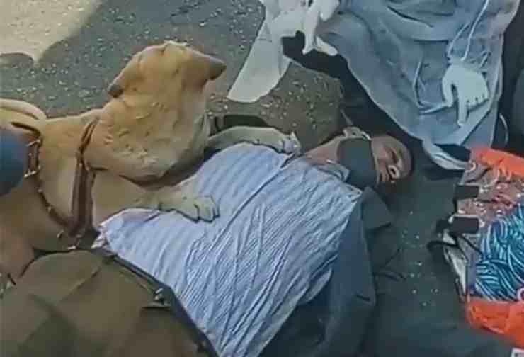 Nina, il cane Labrador che aiuta il proprietario svenuto (screenshot Twitter)