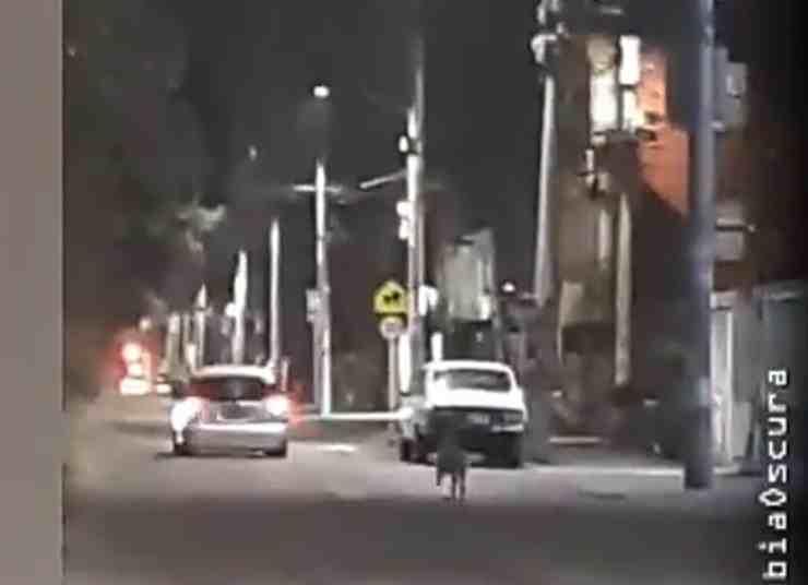 Cane abbandonato per strada (screenshot Twitter)