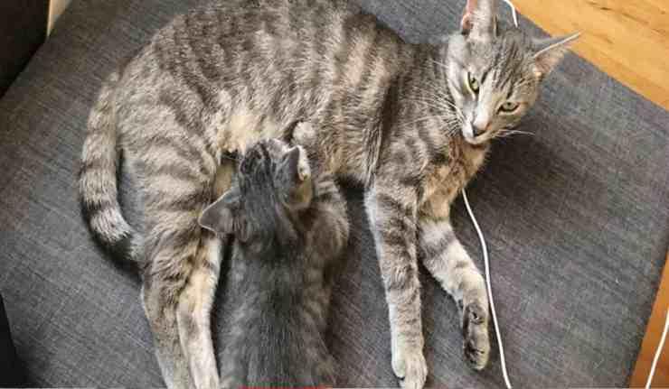 Shauna, la gatta randagia che è riuscita a partorire in extremis (foto Instagram)