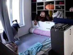 Naughty, il cane che aspetta alla finestra il ritorno della sua proprietaria (screenshot YouTube)
