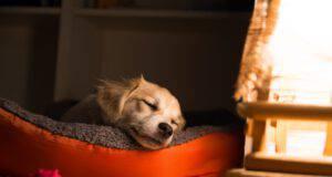 La prima notte del cane a casa