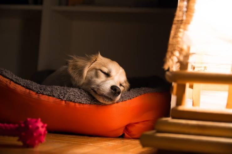 La prima notte del cane a casa,