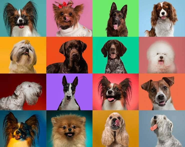 Razze di cani meno conosciute