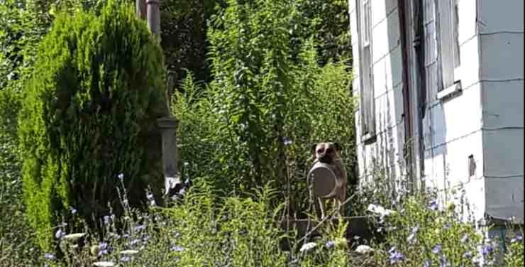 Cane randagio gira per le strade con la ciotola in bocca (screenshot YouTube)
