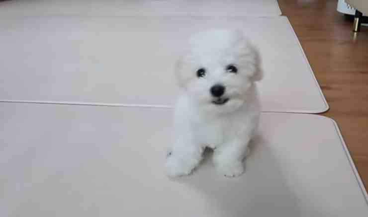 Bow, il cane coraggioso che per la prima volta va dal veterinario (screenshot YouTube)