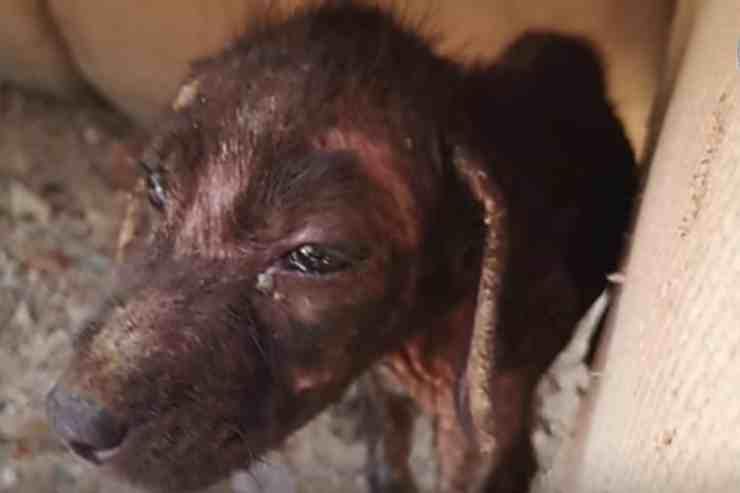 Carbonella, il cane salvato dai rifiuti: la sua storia (screenshot YouTube)