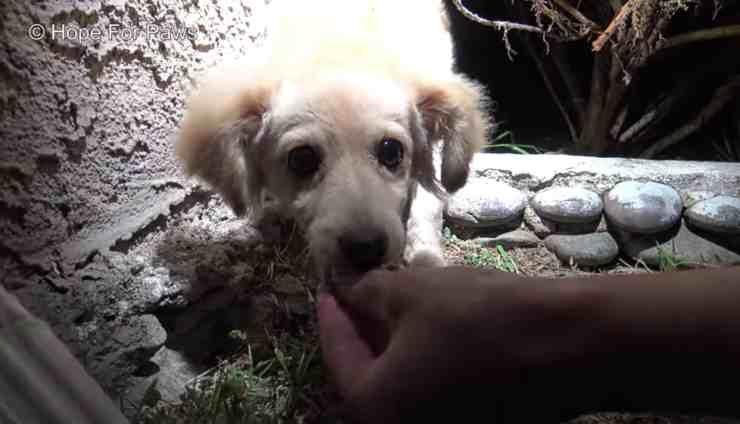 Fox cane abbandonato tra i cespugli (screenshot YouTube)