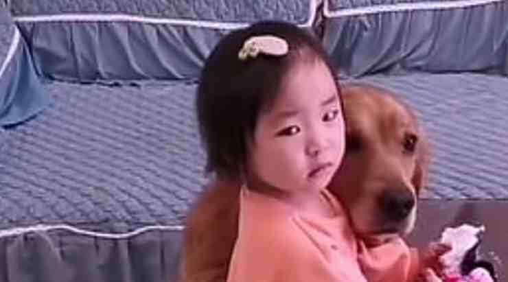 Harry, il cane Golden Retriever insieme alla sua padroncina di due anni (screenshot YouTube)