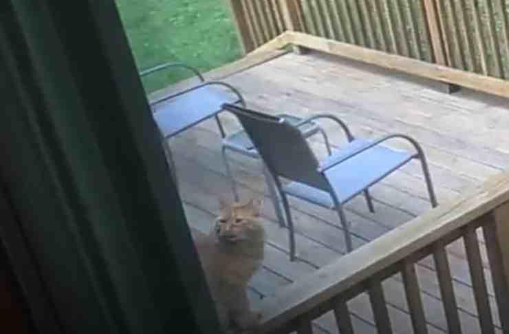 Cinnabon, il gatto randagio (screenshot YouTube)