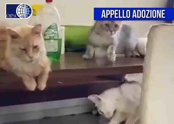 70 gatti (screenshot Facebook)