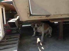 Blue Bayou, il cane abbandonato in un negozio di auto (screenshot YouTube)