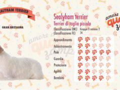 Sealyham Terrier scheda razza