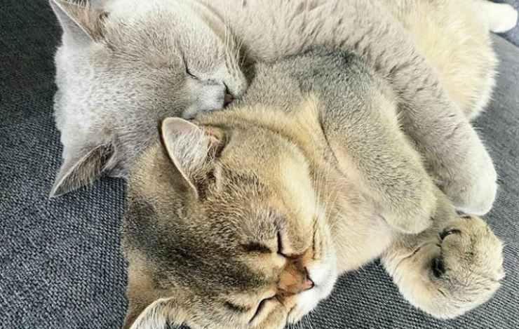 L'abbraccio più bello (foto Instagram)