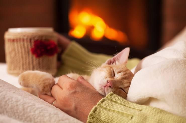 gatto dorme sorride