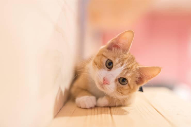 gatto solo casa