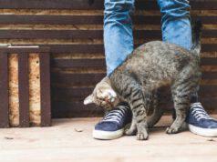 Fare la gatta morta (Foto Adobe Stock)