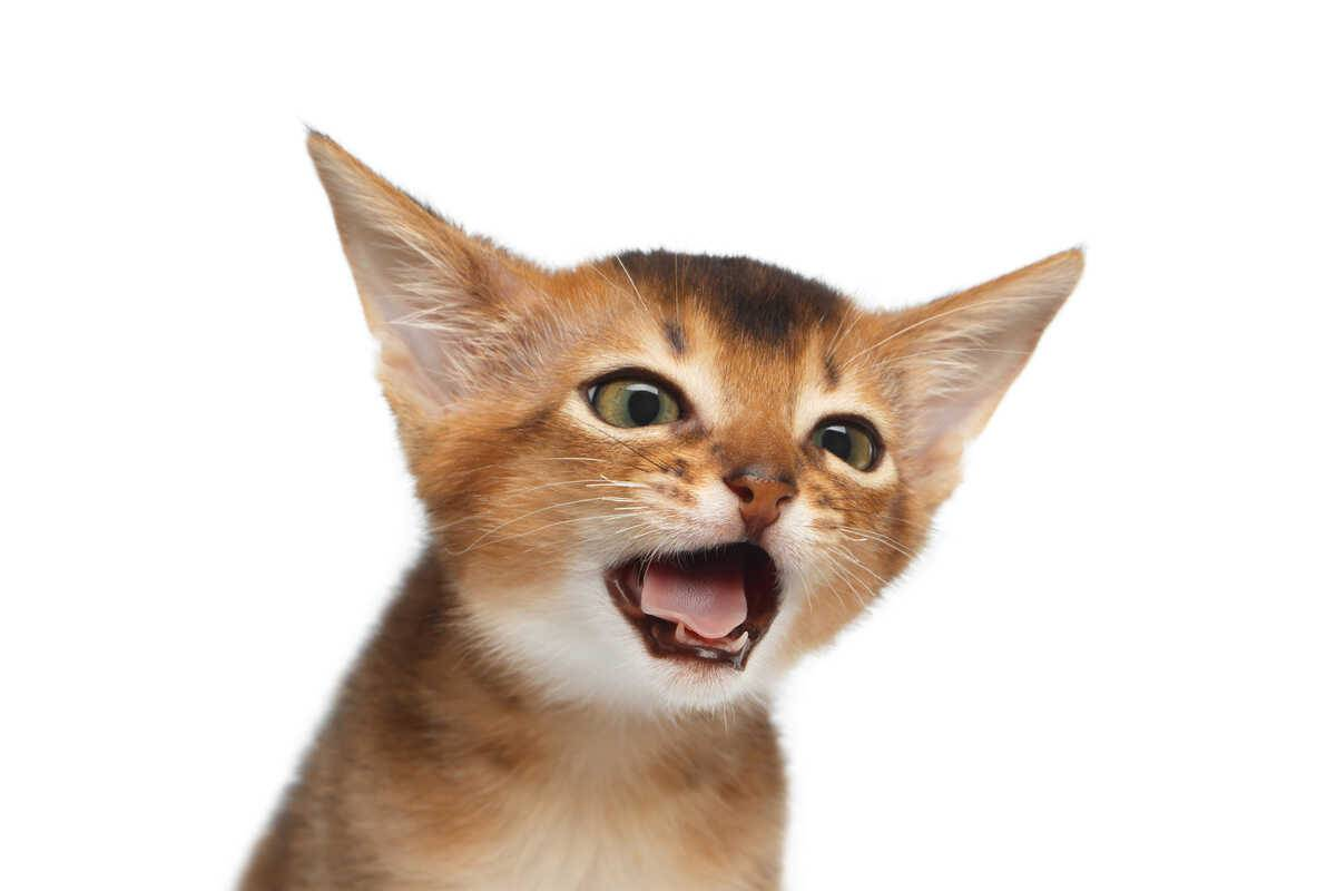 tosse gatto rimedi naturali