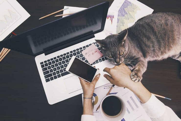 Smart working con il gatto