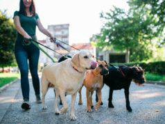 Responsabilità dog sitter (Foto Adobe Stock)