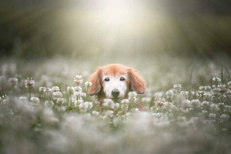 poesie perdita cane