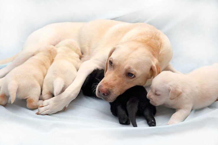 Come comportarsi cagnolini appena nati