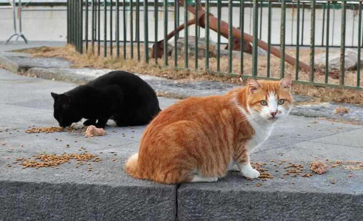 È vietato nutrire i gatti randagi? (Foto Adobe Stock)