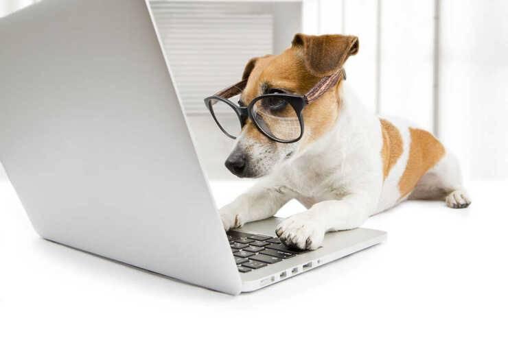 videochiamata cane ci riconosce