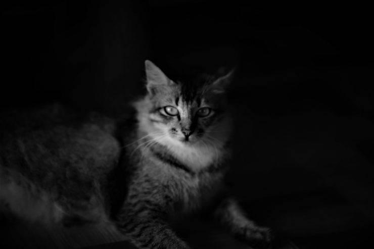 al gatto piace stare al buio