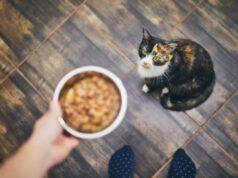 alimenti per gatti allergici