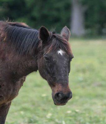 Le allergie nel cavallo (Foto Adobe Stock)
