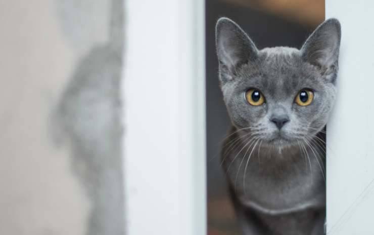 Il gatto furbetto (Foto Pixabay)