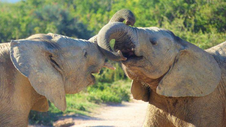 animali più forti al mondo