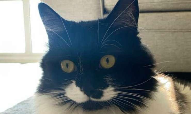 Il gatto in primo piano (Foto Instagram)