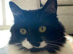 Il gatto spione (Foto Instagram)