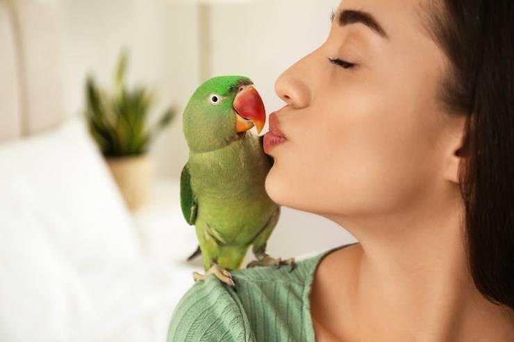baci al pappagallo
