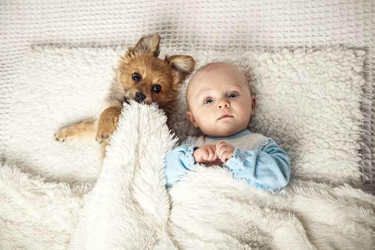 neonato e cane a letto