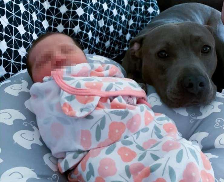 cane sorveglia bambina