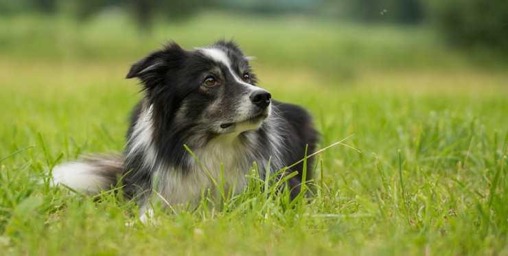Un cane preoccupato (Foto Pixabay)