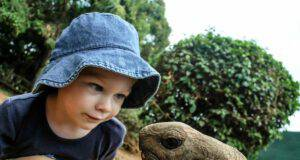 Tartarughe per bambini