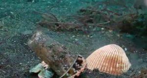 Il polipo intrappolato nel bicchiere (Foto video)