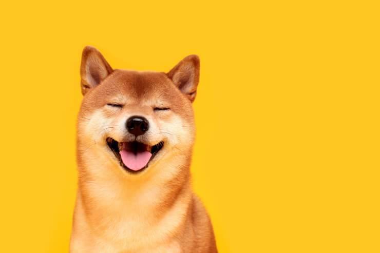 cane felice rilassato