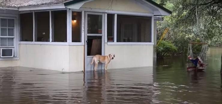 cane abbandonato famiglia alluvione