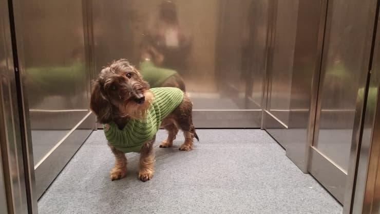 Il cane nell'ascensore condominiale (Foto Adobe Stock)