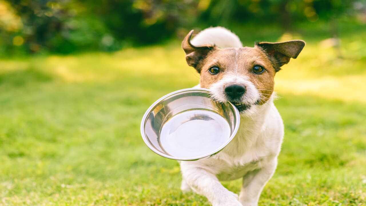 Il cane può mangiare frutta secca? (Foto Adobe Stock)