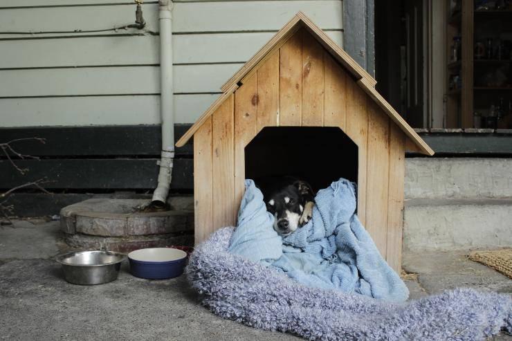 cuccia riscaldata cane gatto