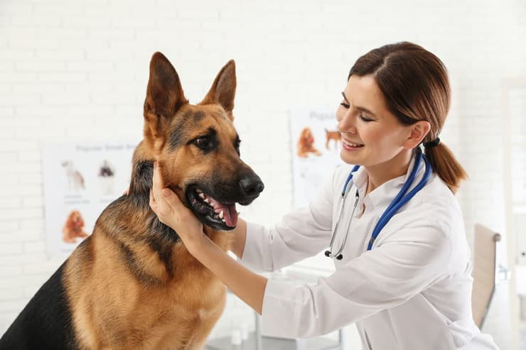 Sterilità nel cane maschio (Foto Adobe Stock)