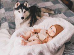 cane e bambino sul letto