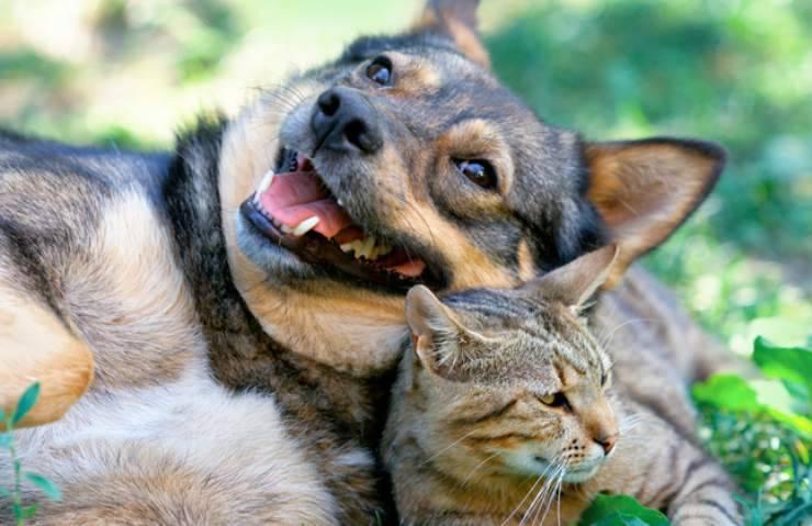 Cane e gatto felici Facebook