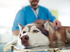 Cane affetto da tumore.